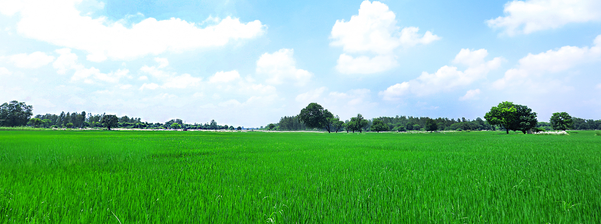 amethi agriculture